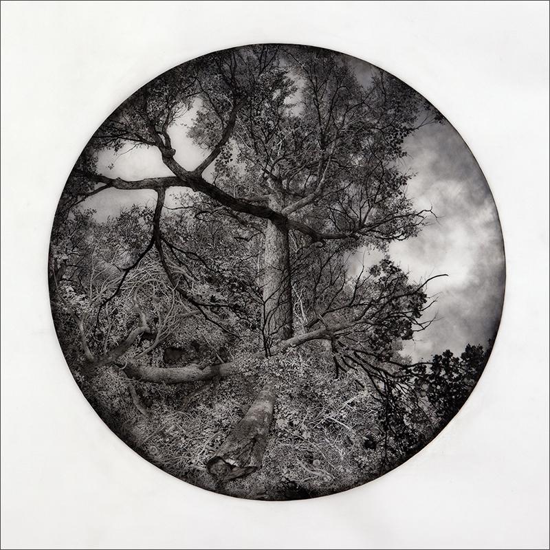 """VAST MEMORY, 2014  Encre sur mylar givré / Ink on frosted Mylar  91.4  x 91.4 cm / 36"""" x 36""""  USD $4,250 (avec encadrement / framed)"""